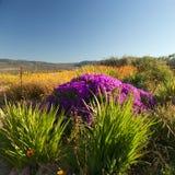Paisagem com flores e as plantas bonitas Foto de Stock Royalty Free