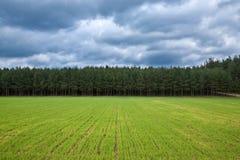 Paisagem com floresta Imagens de Stock