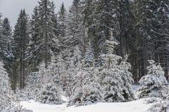 Paisagem com a floresta feericamente da cauda do inverno Fotos de Stock Royalty Free