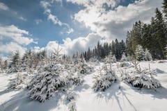 Paisagem com a floresta feericamente da cauda do inverno Imagem de Stock