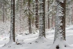 Paisagem com a floresta feericamente da cauda do inverno Imagem de Stock Royalty Free