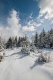 Paisagem com a floresta feericamente da cauda do inverno Fotografia de Stock Royalty Free