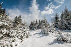 Paisagem com a floresta feericamente da cauda do inverno Fotografia de Stock