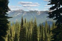 Paisagem com a floresta no Columbia Britânica Montagem Revelstoke lata fotos de stock