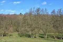Paisagem com a floresta no dia de inverno claro Foto de Stock