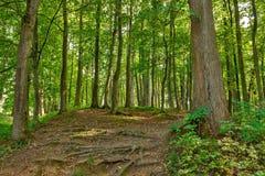 Paisagem com a forquilha rural das estradas na floresta imagem de stock