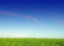 Paisagem com grama e céu Fotografia de Stock
