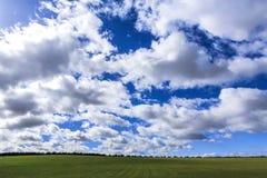 Paisagem com grama verde Imagem de Stock