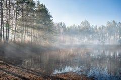 Paisagem com névoa da manhã Imagem de Stock