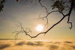 Paisagem com névoa na manhã Foto de Stock Royalty Free