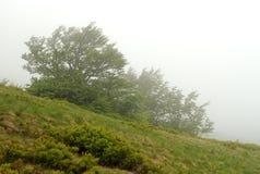 Paisagem com névoa nas montanhas Imagens de Stock Royalty Free