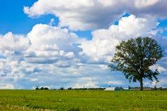 Paisagem com nuvens e uma árvore Imagens de Stock Royalty Free