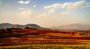 Paisagem com o campo da agricultura em torno de Malealea, Lesoto fotografia de stock royalty free