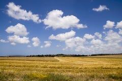 Paisagem com o Cobine que colhe o campo de trigo Imagens de Stock
