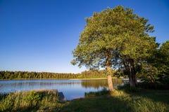 Paisagem com o lago no verão Céu azul Fotografia de Stock Royalty Free