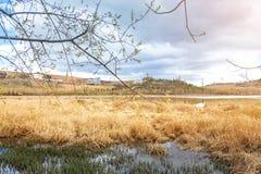 Paisagem com o lago pequeno no dia de verão Imagens de Stock