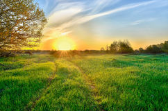 Paisagem com o nascer do sol sobre o prado Imagens de Stock Royalty Free