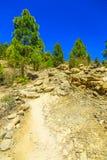 Paisagem com o passeio na ilha de Tenerife Imagem de Stock