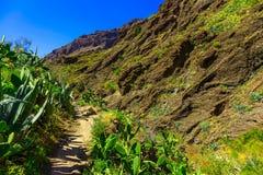Paisagem com o passeio na ilha de Tenerife Fotografia de Stock