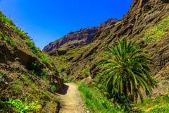 Paisagem com o passeio na ilha de Tenerife Imagem de Stock Royalty Free