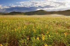 Paisagem com o Yellow Sea das flores Imagens de Stock Royalty Free