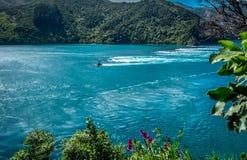Paisagem com oceano, farol, montanhas, ramo de árvore, flores roxas Ba?a de Tasman, ?rea de Nelson, Nova Zel?ndia fotografia de stock royalty free