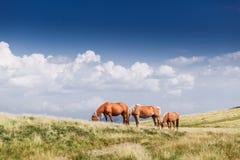 Paisagem com os cavalos selvagens perto da montanha Fotos de Stock Royalty Free
