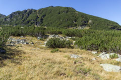 Paisagem com os montes verdes na montanha de Rila Foto de Stock Royalty Free
