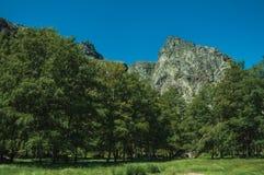 Paisagem com os penhascos rochosos cobertos por arbustos e por floresta imagens de stock