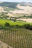Paisagem com os vinhedos em Toscânia Imagem de Stock