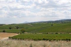 Paisagem com os vinhedos em Toscânia Imagens de Stock
