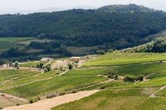 Paisagem com os vinhedos no verão em Toscânia Foto de Stock Royalty Free