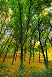 Paisagem com outono no parque Fotografia de Stock Royalty Free