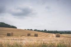Paisagem com pacotes de feno em um campo Foto de Stock