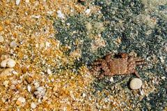 Paisagem com penhasco e dunas na praia perto de Albufeira Portu Foto de Stock