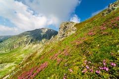 Paisagem com pico de Mohoru de montanhas de Parang Imagem de Stock Royalty Free