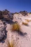 Paisagem com por do sol sobre dunas com grama alaranjada foto de stock