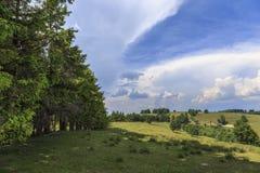 Paisagem com prado e as árvores dispersadas Fotos de Stock Royalty Free
