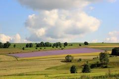 Paisagem com prado verde e o céu azul Fotografia de Stock Royalty Free