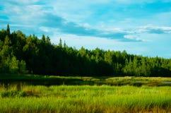 Paisagem com rio, floresta verde do pinho Fotos de Stock Royalty Free