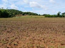 Paisagem com um campo do milho novo Foto de Stock