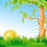 Paisagem com um nascer do sol e uma grande árvore Fotos de Stock Royalty Free