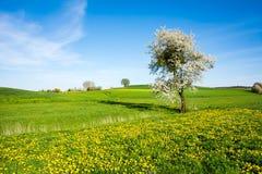 Paisagem com uma árvore de florescência Imagem de Stock