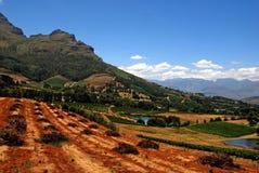 Paisagem com vinhedo (África do Sul) Foto de Stock Royalty Free