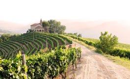Paisagem com vinhedos e igreja Foto de Stock