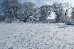 Paisagem congelada calma do inverno com as árvores geadas bonitas Imagens de Stock