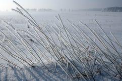 Paisagem congelada do inverno Fotos de Stock Royalty Free