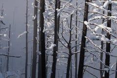 Paisagem congelada do inverno da neve das montanhas rochosas de Colorado imagem de stock royalty free