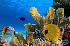 Paisagem coral Egypt Fotos de Stock