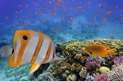 Paisagem coral, Mar Vermelho, Egito Fotografia de Stock Royalty Free